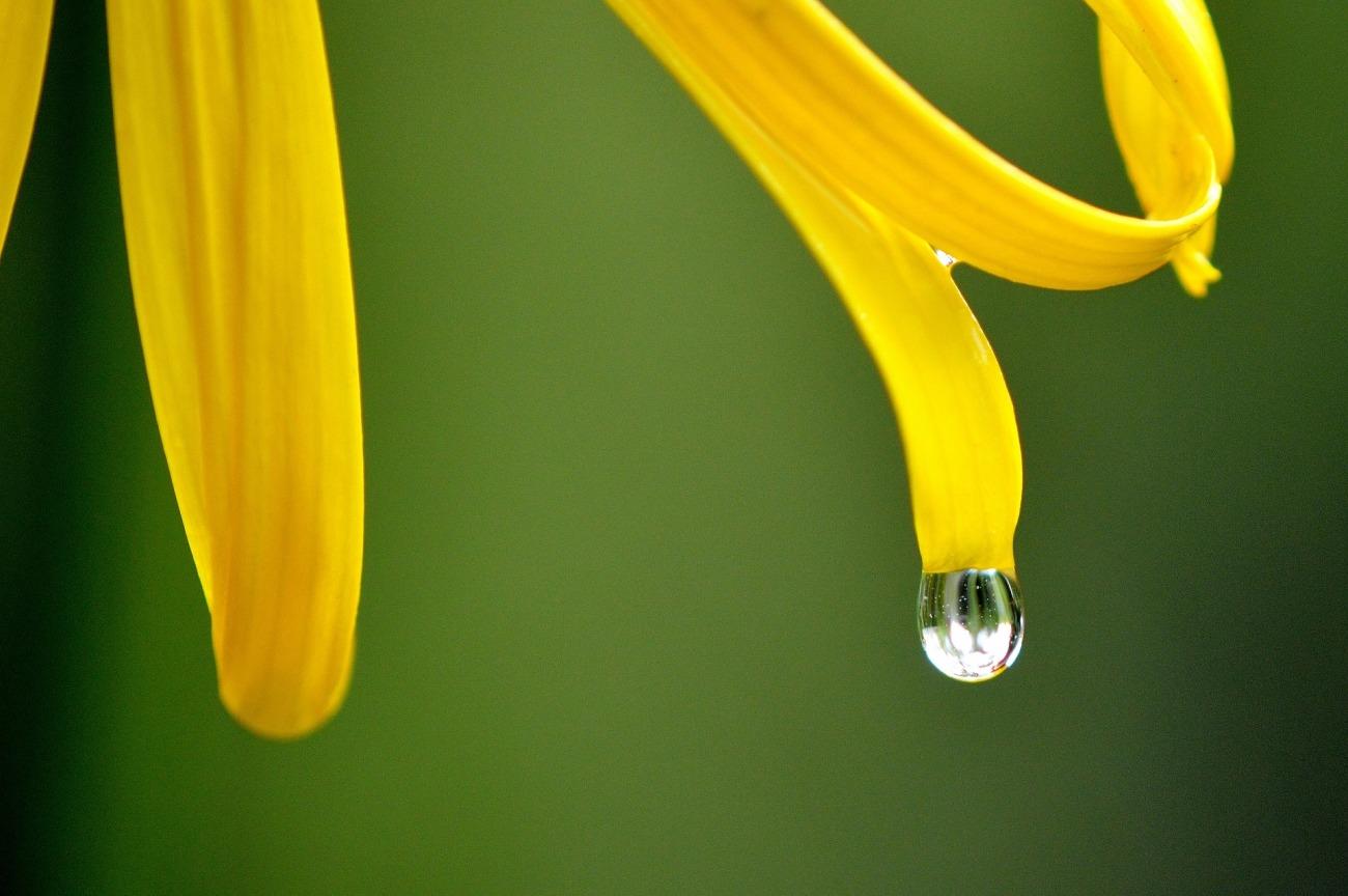 flower-2292120_1920