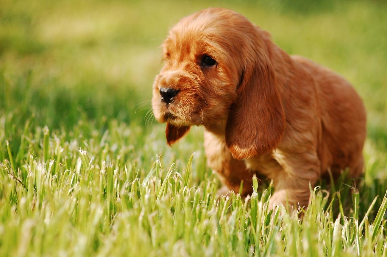 puppy-2414185_1920